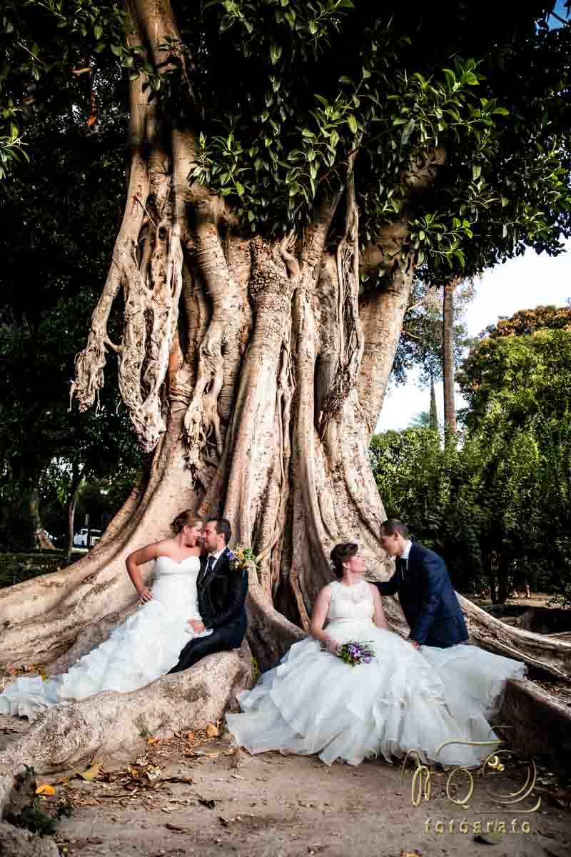 Dos parejas de novios sentados en un gram ficus de jardines Murillo de Sevilla