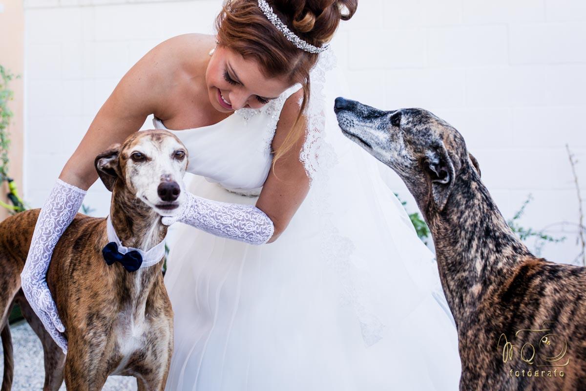 Novia despidiéndose de sus dos perros Galgos