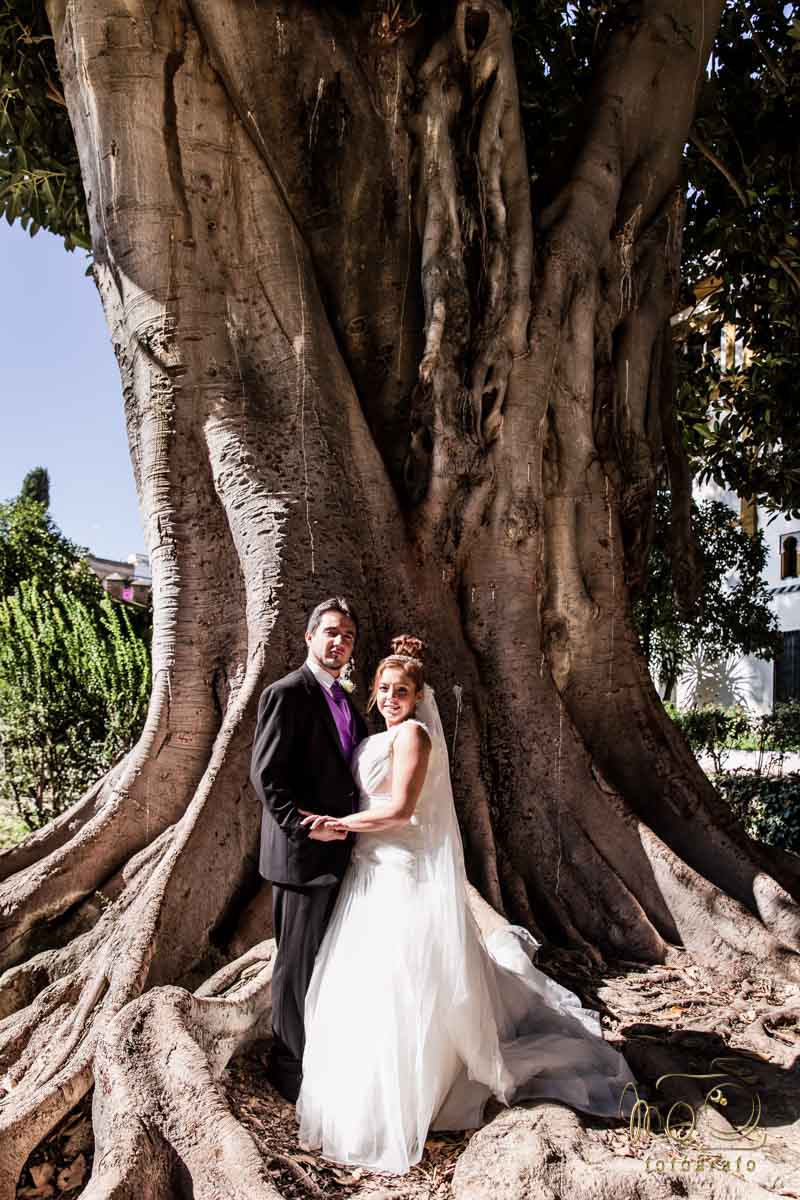 Novios en exteriores después de la boda bajo un roble milenario